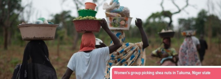 Women's group picking shea nuts in Takuma, Niger state