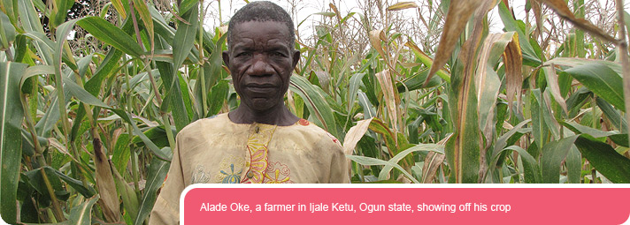 Alade Oke, a farmer in Ijale Ketu, Ogun state, showing off his crop