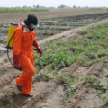 Scaling up the Spray Service Providers Model: Assuring Farmer Access to Safe and Quality Agrochemicals