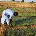 Bottom of the Pyramid Models for Driving Access to Agricultural Inputs